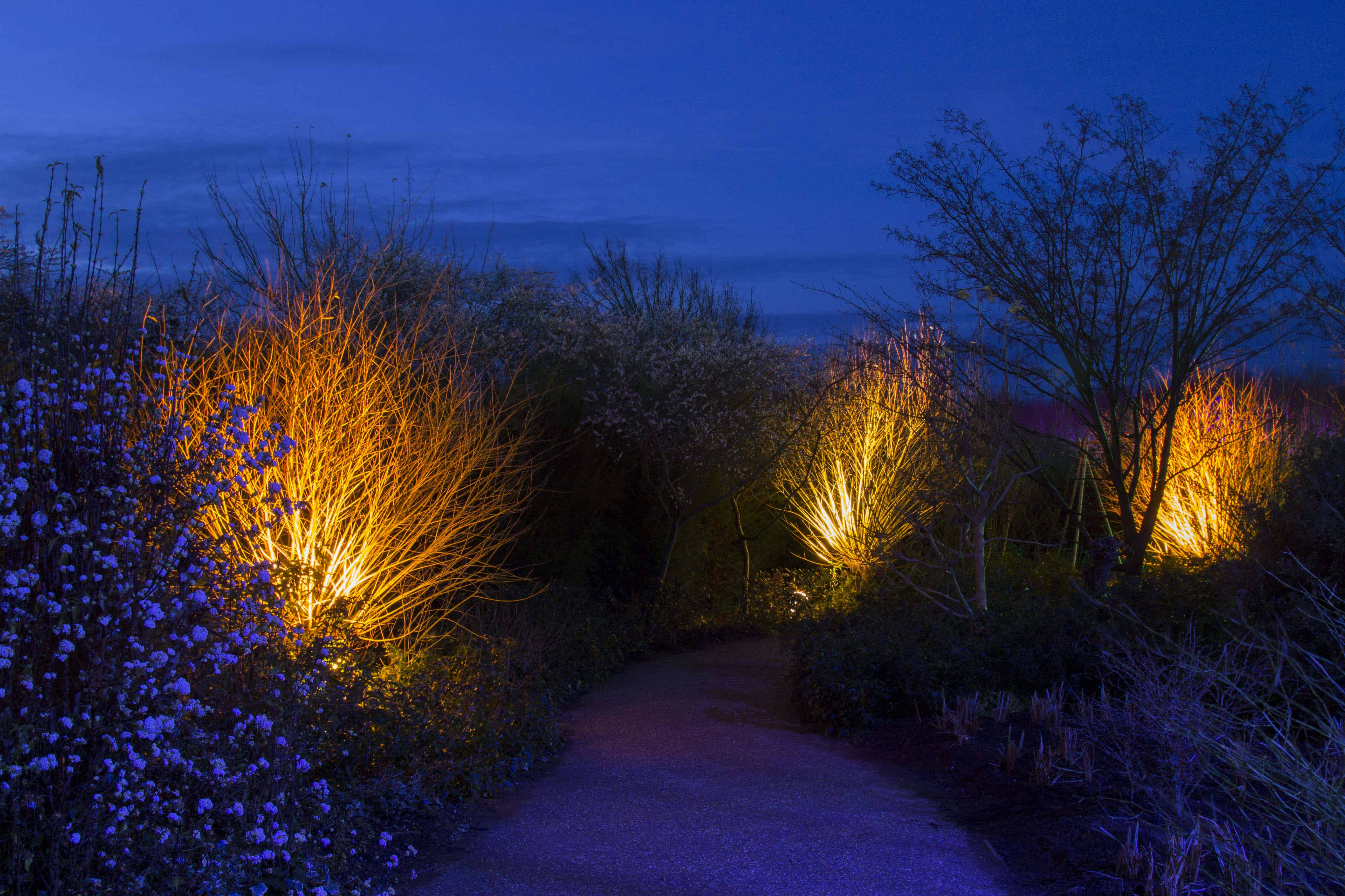 Anglesey Abbey Winter Lights 2015 -01