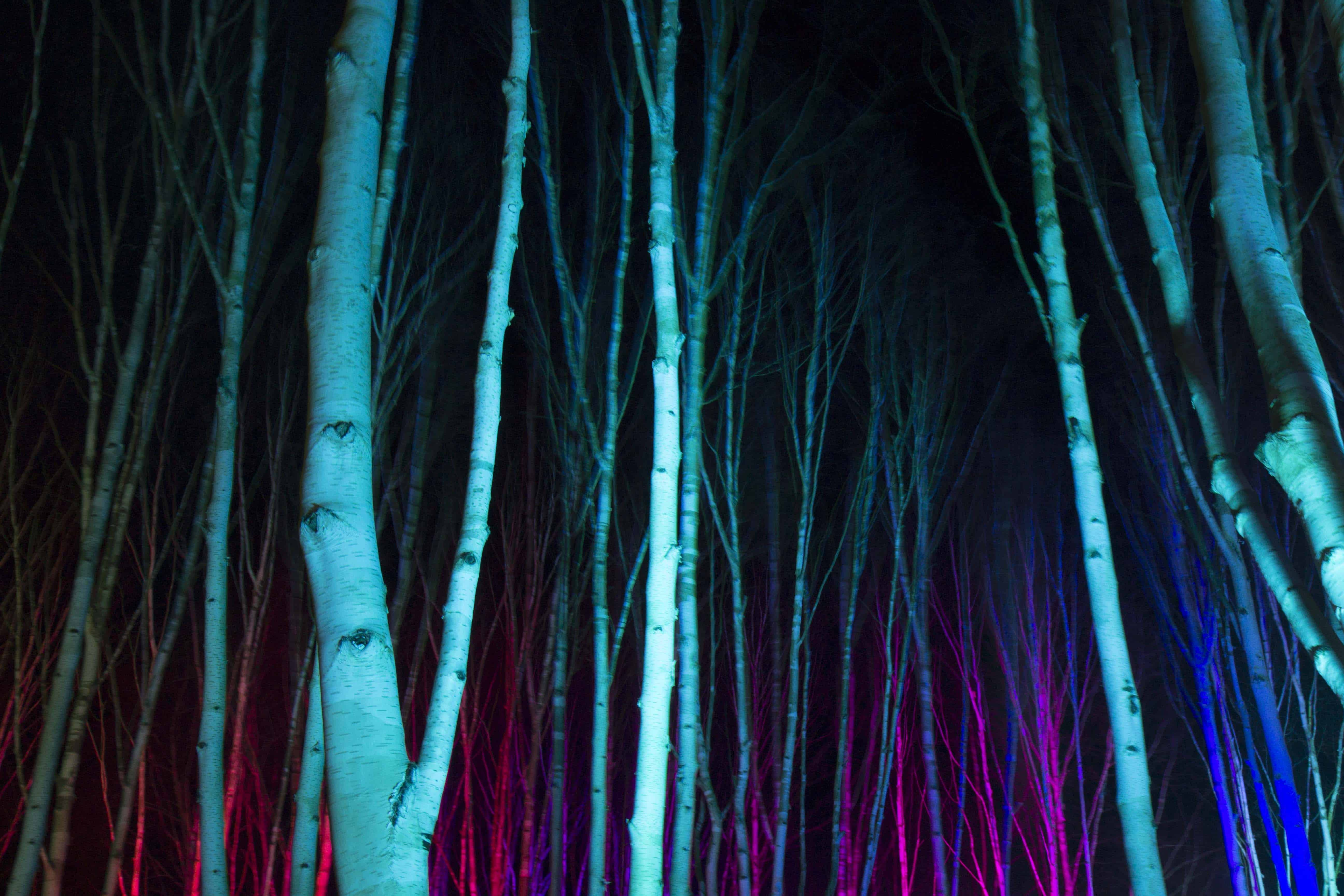 Anglesey Abbey Winter Lights 2015 -02