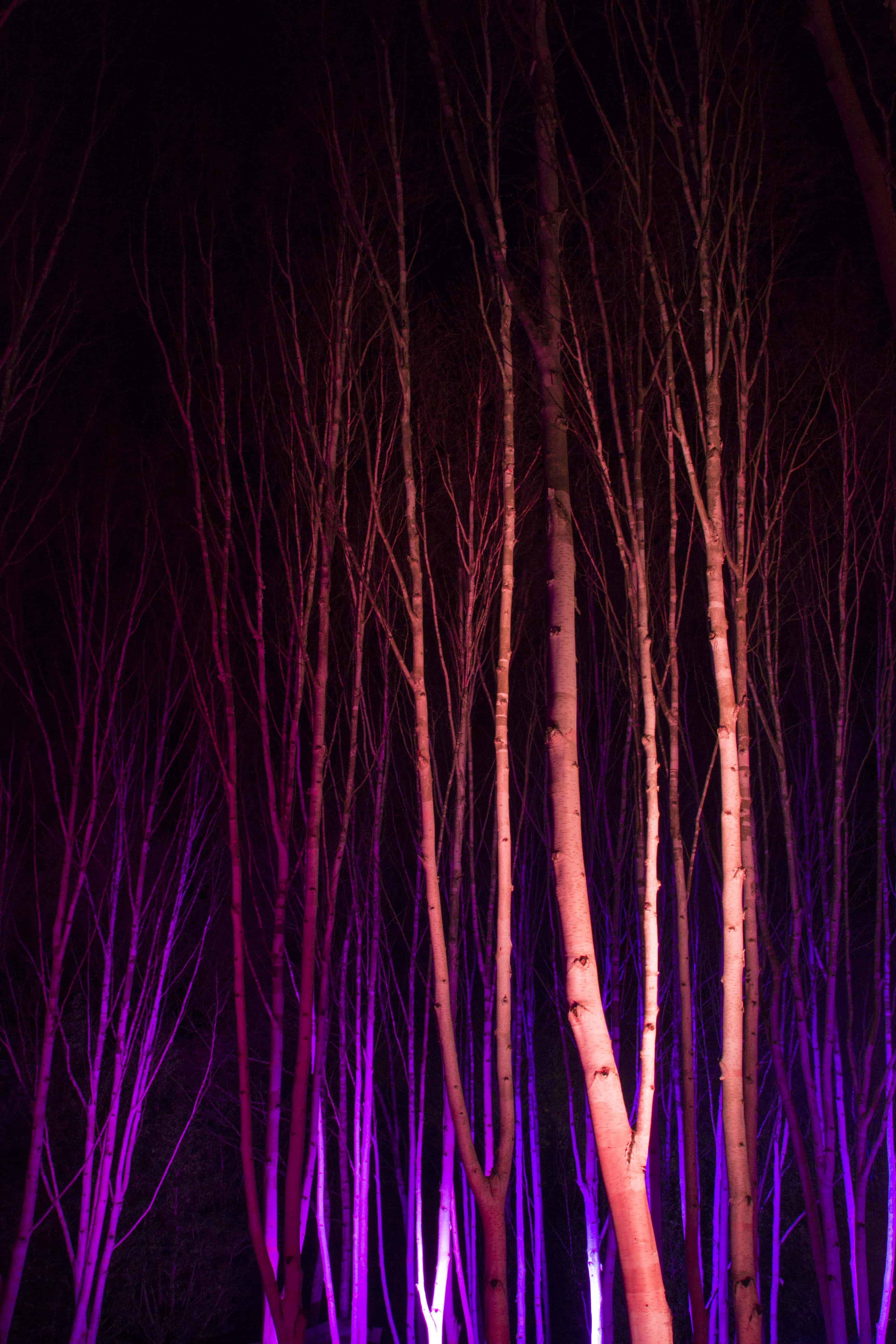 Anglesey Abbey Winter Lights 2015 -04