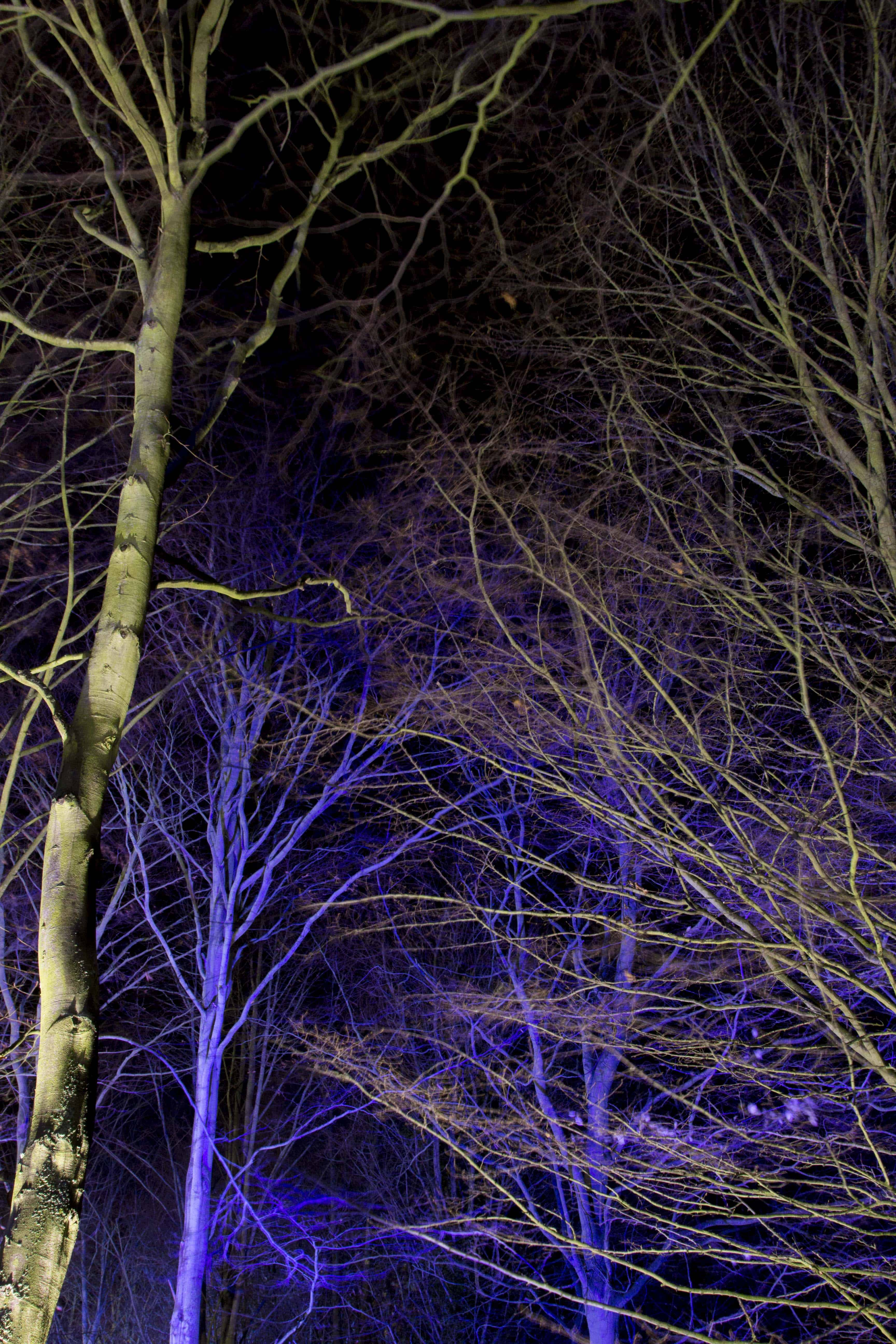 Anglesey Abbey Winter Lights 2015 -05