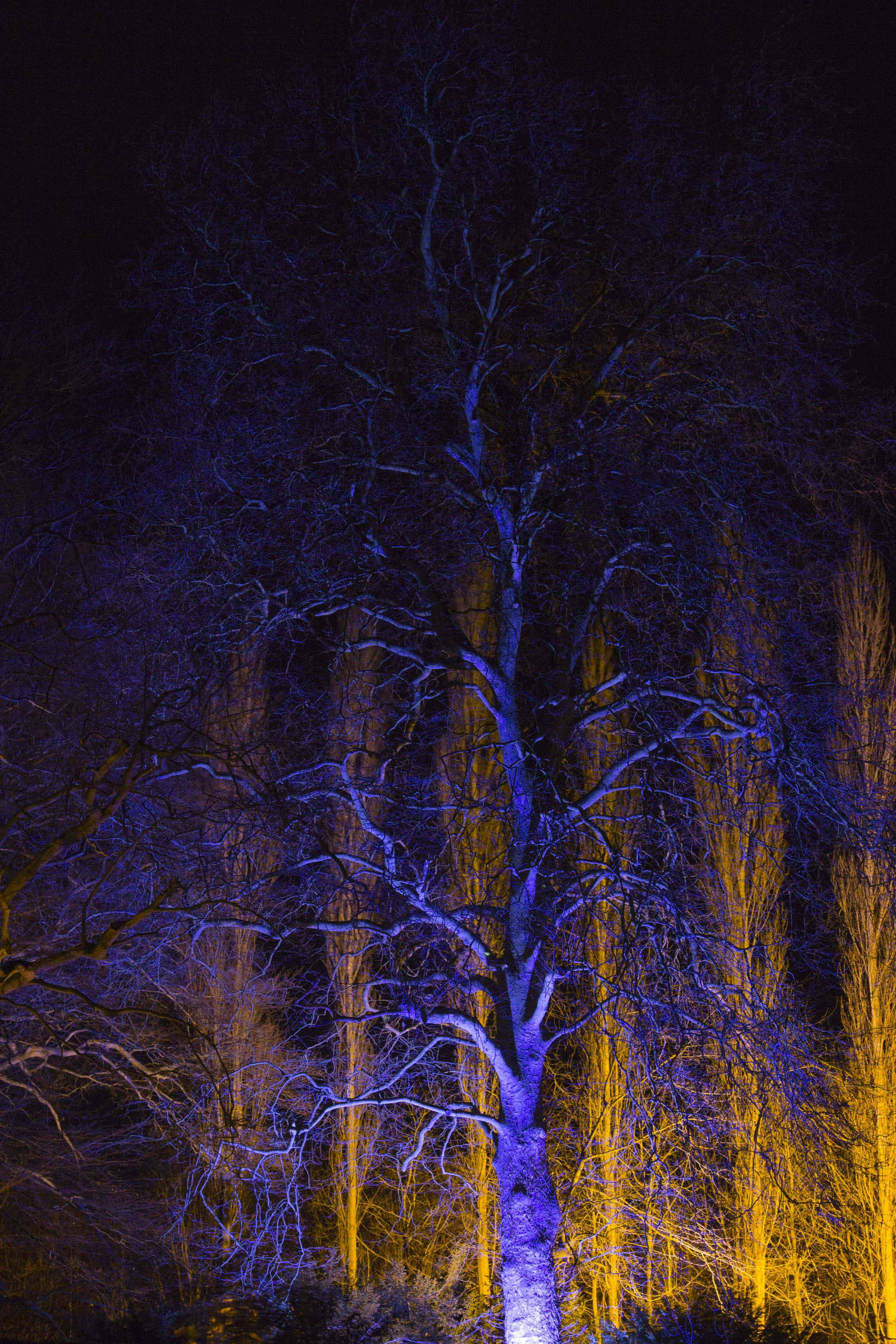 Anglesey Abbey Winter Lights 2015 -09